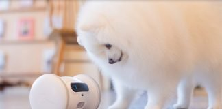VARRAM-Pet-Fitness-Robot