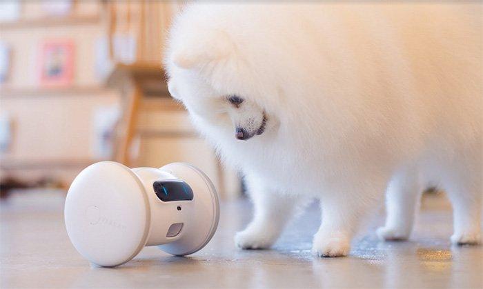 VARRAM: Smart Fitness Robot for Pets